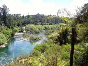 Neuseeland | Nordinsel, Spaziergang entlang des Waikato Rivers zu den Huka Falls bei Taupo durch sattgrüne Farn e und Pflanzen bei türkisfarbenem klaren Wasser