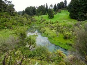 Neuseeland | Nordinsel, Te Waihou Blue Spring. Kristallklares, türkisfarbenes Wasser inmitten sattgrüner Hügel, Tannenbäumen , Farnen und Palmen