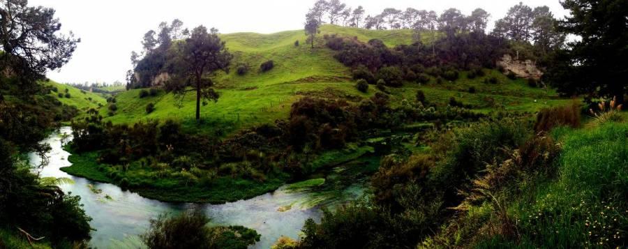 Nordinsel, Panorama auf die Te Waihou Blue Spring. Kristallklares, türkisfarbenes Wasser inmitten sattgrüner Hügel, Tannenbäumen , Farnen und Palmen