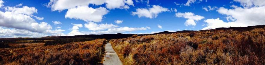 Neuseeland | Nordinsel, Panorama beim Tongariro Alpine Crossing . Ein schmaler Weg führt durch die rot-braunen Büsche bei blauem Himmel