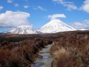 Highlights der Nordinsel, Taranaki Track, Tongariro Nationalpark Alpine Crossing. Ein schmaler Weg führt durch die rot-gelben Sträucher mit Blick auf schneebedeckte Vulkanberge bei blauem Himmel