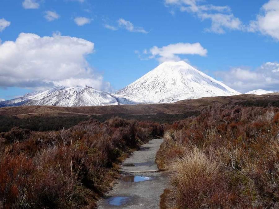 Neuseeland | Nordinsel, Taranaki Track, Tongariro Nationalpark Alpine Crossing. Ein schmaler Weg führt durch die rot-gelben Sträucher mit Blick auf schneebedeckte Vulkanberge bei blauem Himmel