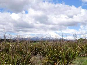 Nordinsel, schneebedeckte Vulkanberge im Tongariro Nationalpark, im Vordergrund grüne Wiesen, Sträucher und Gräser bei blauem Himmel mit vorbeiziehenden Wolken