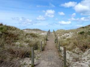 Neuseeland | Südinsel, Weg zum Strand am Ocean View Recreation Reserve bei Dunedin. Ein mit Holzpfählen begrenzter Weg führt durch die Dünen bei blauem Himmel mit weißen Schäfchenwolken
