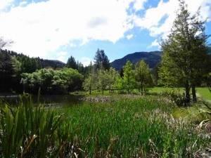 Neuseeland | Südinsel, Hammer Springs. Panorama auf Schilf einen kleien See und grüner Landschaft mit Bergen im Hintergrund bei Sonnenschein und blauem Himmel