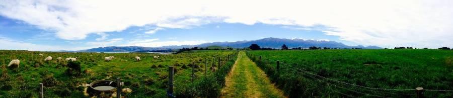 Neuseeland | Südinsel, Panorama im Kaikoura Scenic Reserve auf sattgrüne Wiesen mit Schafen und schneebedeckte Berge im Hintergrund