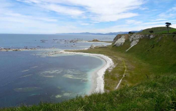 Neuseeland | Südinsel, Kaikoura Scenic Reserve South Bay. Blick auf eine Bucht mit türkisfarbenem Meer und eine mit sattgrünen Wiese bewachsenen Klippe