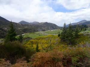 Neuseeland | Südinsel, Gelbe Blütenpracht am Lewis Pass