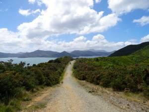 Neuseeland | Südinsel, Panorama und Trail des Queen Charlotte Sound Snout Track in der Nähe von Picton