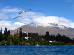 Neuseeland | Südinsel, Lake Wakatipu in Queenstown mit schneebedeckten Bergen im Hintergrund uns fliegenden Möwen im Vordergrund. Tipps zu Sehenswürdigkeiten, interessante Orte & Highlights findest Du im Reisebericht