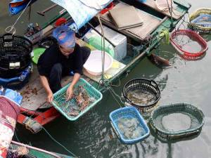 Vietnam | Norden, schwimmender Markt in der Ha Long Bay. Frauen verkaufen Krabben und Krebse
