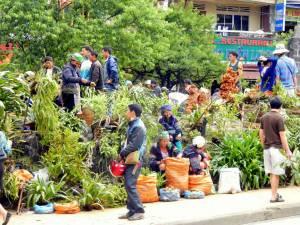 Vietnam | Norden, Pflanzen-Markt in Sa Pa