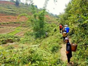 Vietnam | Norden, geführte Wanderung in Sa Pa. Eine Gruppe Einheimischer und ein paar Touristen auf dem Weg durch die Reisfelder. Die Tour ist einer unserer Top-Tipps in Nordvietnam