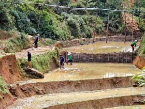 Vietnam | Norden, Arbeit gibt es immer in den Reisterrassen der Bergdörfer von Sa Pa. Männer und Frauen arbeiten in den Feldern im Wasser stehend