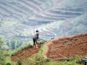 Vietnam | Norden, harte Arbeit wartet in den wunderschönen Reisterrassen bei Sa Pa. Ein Mann mit Rasenmäher am Abhang eines Feldes