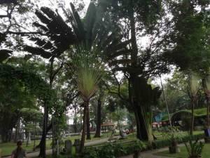 Vietnam | Süden, Tao Dan Park in Ho Chi Minh City. Panorama im grünen Park mit verschiedenen Palmen als Schattenspender