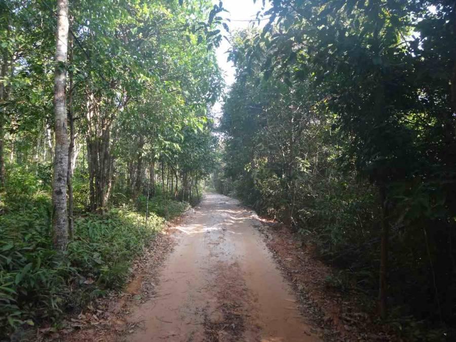 Vietnam | Süden, Fahrt durch den Urwald auf Phu Quoc . Eine Piste führt inmitten durch den Urwald