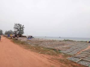 Vietnam | Süden, überall getrockneter Fisch im Nordwesten auf Phu Quoc. Direkt am Strand werden die kleinen Fische zur Herstellung von Fischsoße getrocknet