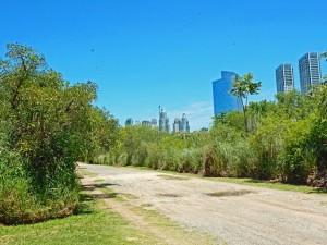 Argentinien | Wolkenkratzer hinter grünen Bäumen. Die Skyline von Buenos Aires aus dem Costanera Sur Naturpark