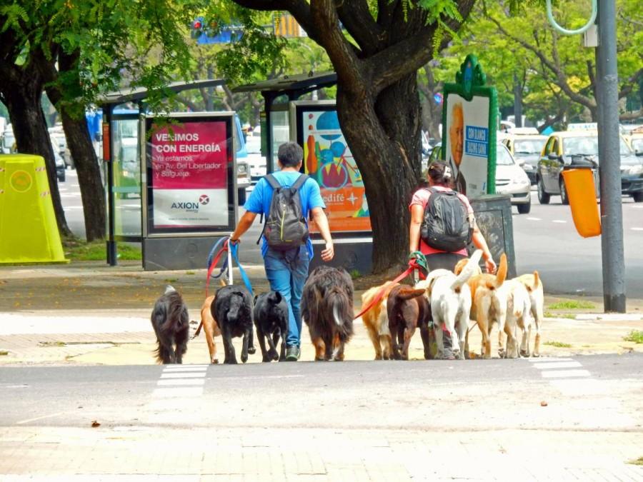 Argentinien | Dog Sitting gehört zum festen Stadtbild von Buenos Aires, wenn einzelnen Personen dutzende Hunde für deren Besitzer ausführen