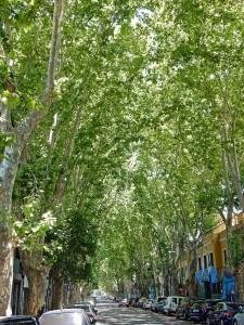 Buenos Aires | interessante Orte: Typische Allee mit hohen Bäumen Palermo