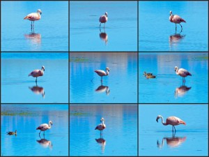 Argentinien | Patagonien, Flamingos am Lago Argentino in El Calafate