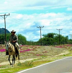 Argentinien | Gaucho auf dem Pferd reitend in der Weinregion bei Cafayate