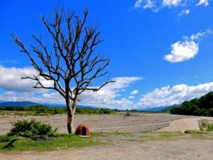 Jujuy, Argentinien | Panorama auf dem Weg von Salta nach San Salvador de Jujuy. Blauer Himmel, ein Fluss und ein kahler Baum