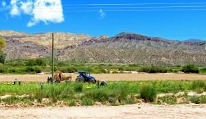 Argentinien | Landwirtschaft auf der Quebrada de Humahuaca in der Provinz Salta. Ein Trekker sammelt die Ernte ein