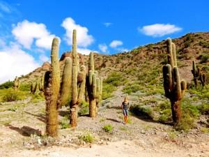 Argentinien | Riesen Kakteen auf der Quebrada de Humahuaca bei Tilcara. Karin steht neben mehreren meterhohen Kakteen