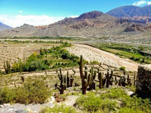 Argentinien | Panorama auf die Umgebung in der Festung Pucara de Tilcara. Blick auf die umgeben Berge und das Tal mit zahlreichen meterhohen Kakteen