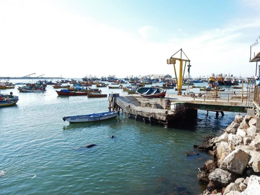 Chile | Hafen in Arica. Zahlreiche Fischerboote ankern im Wasser, Seelöwen schwimmen ihre Züge