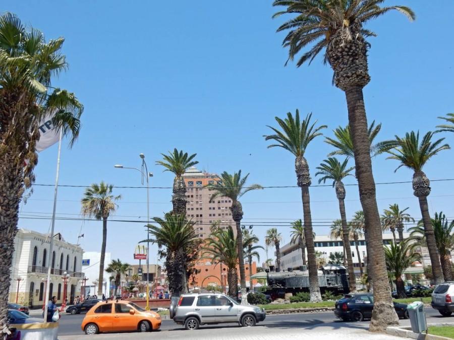 Chile | Palmen am Plaza Colon in Arica