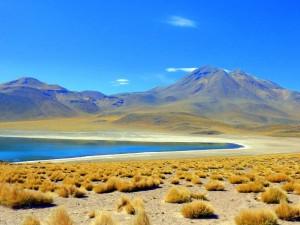 Atacama-Wüste| interessante Orte: Laguna Miscanti. Blick auf den See mit Vulkanen im Hintergrund