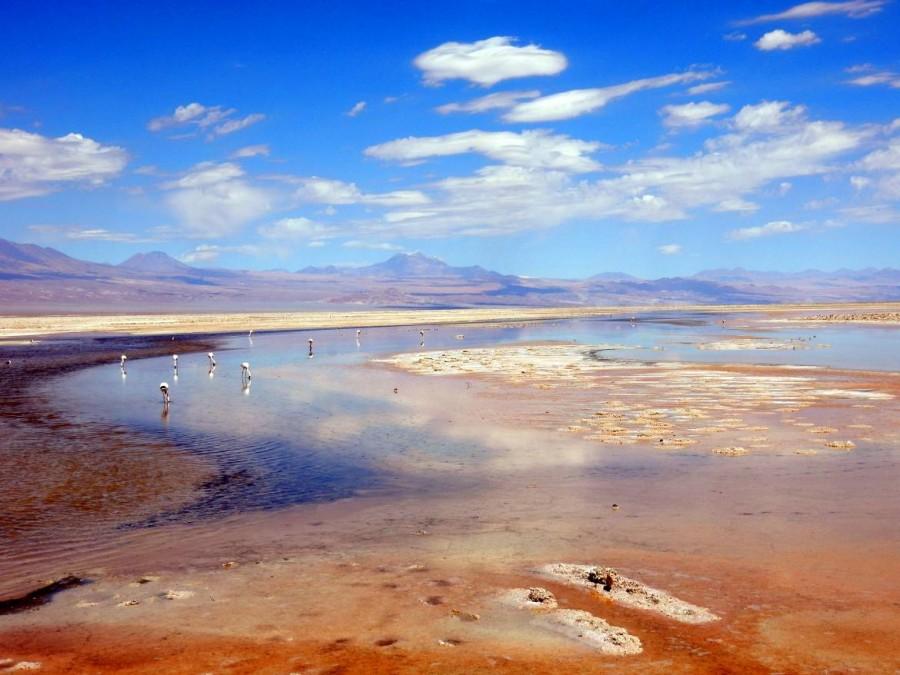 Atacama Wüste| interessante Orte Tour: Panorama mit Flamingos in der Chaxa Lagune, Lagunas Chaxas in der Salar de Atacama