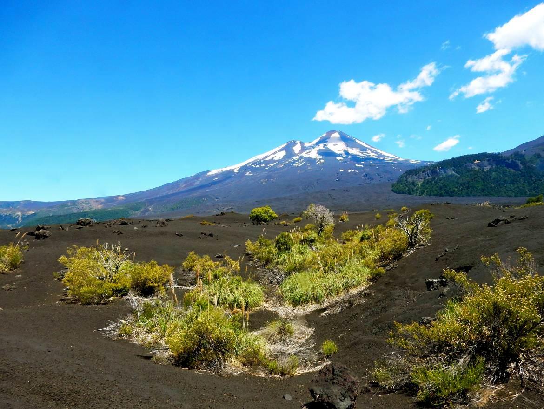 Chile | Temuco, Blick auf den Vulkan Llaima im Conguillio National Park bei blauem Himmel mit schwarzem Vulkansand und ein paar grünen Gräsern im Vordergrund