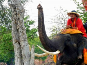 Thailand | Guide im Elephant Village sitzend auf einem Elefanten der den Rüssel hebt