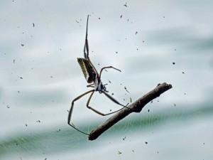 Brasilien | Ilha Grande, Die Spinnen erreichen im Urwald solide Größen