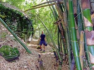Brasilien | Ilha Grande, Brasilien | Ilha Grande, Der Bambus entlang des Wanderweges erreicht gigantische Dimensionen in Brasilien