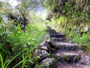 Peru | Machu Picchu, viele Treppen gilt es zu bewältigen auf dem Trail beim Aufstieg von Aguas Calientes zur Inka-Stadt Machu Picchu. Blick auf die Stufen inmitten der sattgrünen Pflanzen am Wegesrand