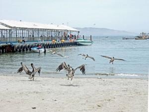 Peru | Islas Ballestas Tour, Boots-Anleger am Strand in Paracas mit seinen Pelikane