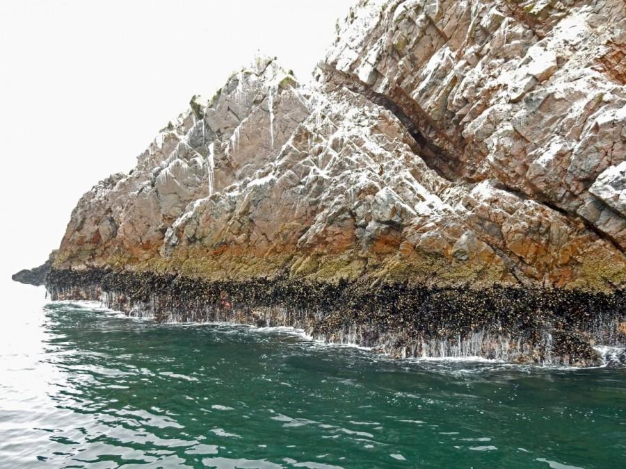 Peru | Paracas, Islas Ballestas Tour, Muscheln, die je nach Wasserstand zu sehen sind und vom Kot verfärbte Felsen