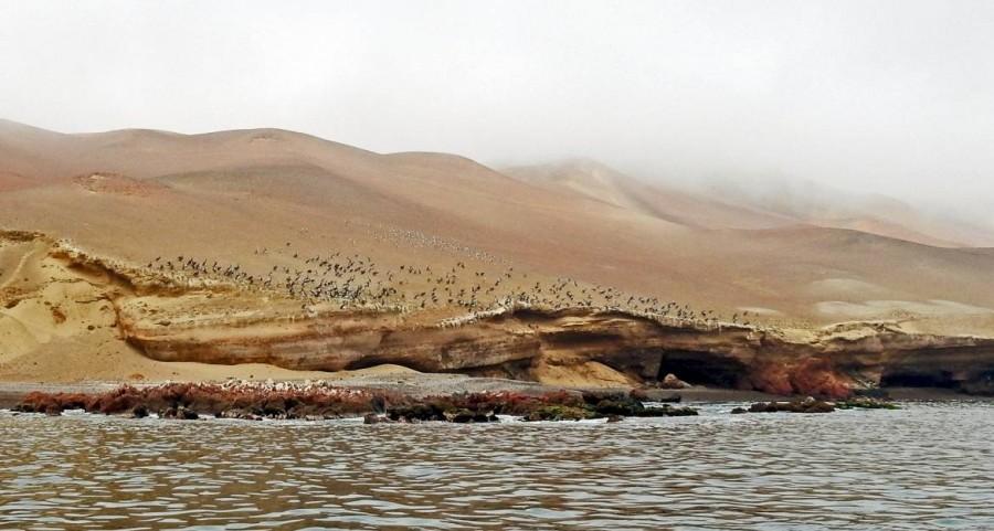 Peru | Paracas, Islas Ballestas Tour, Am Morgen von Nebel verborgen, die Küstenlinen der Paracas-Halbinsel mit unzähligen Vögeln, Kormoranen und Pelikanen