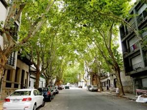 Uruguay | Montevideo, Typische Allee in einem Wohngebiet