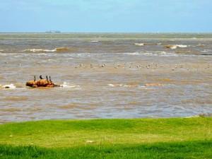 Uruguay | Montevideo, Das braune Wasser des Rio del Plata vermischt sich mit dem Altantik. Im Hintergrund ein Container-Schiff