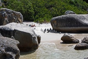 Südafrika | Kap-Halbinsel, Simons Town, Boulders Beach, Baden mit Pinguinen
