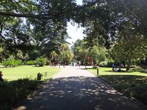 Südafrika | Kapstadt, Weg im Gardens Companys Botanical Garden