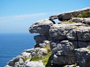 Südafrika | Kapstadt, Kap-Halbinsel, Klippschliefer im Cape Point National Park