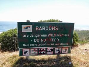 Südafrika | Kapstadt, Kap der Guten Hoffnung im Cape Point National Park. Nahaufnahme eines Warnschild vor Affen