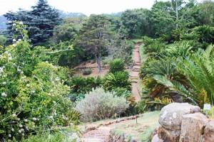 Südafrika | Kapstadt, Kirstenbosch Botanischer Garten. Blick auf die Wege im grün bewachsenen Garten